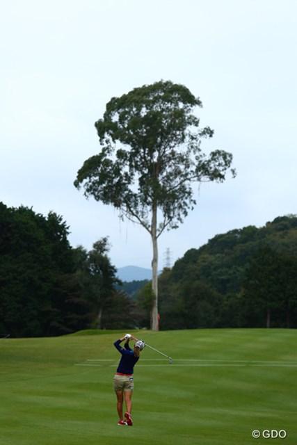 2Hグリーンの木、本当に大きいです!サイズ感を伝えられず終了