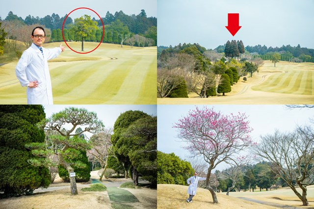 S吉クン5_樹木の種類 (左上)戦略木の例。ピン方向を邪魔するように植えてある/(右上)隣ホールと区切っている安全木。特に高い木(矢印部分)はティグラウンドへの打ち込み防止用/(下2点)景観木の例。ホール移動の際の気分転換などにも配慮しているとのこと。