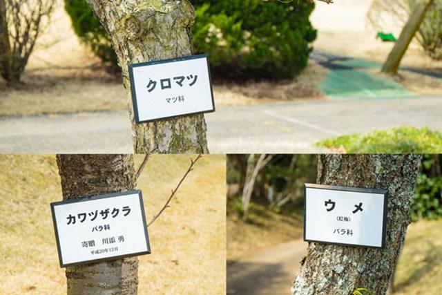 S吉クン5_木の名札 GC成田ハイツリーでは、木の種類が一目で分かる名札がついている。プレイヤーには嬉しい心配りだ。