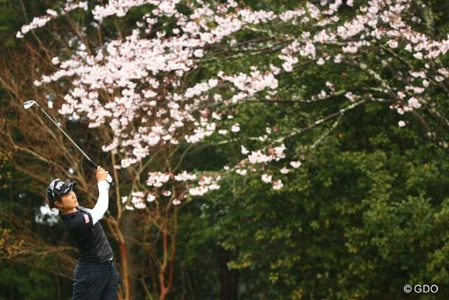 この雨で桜も気になるな~