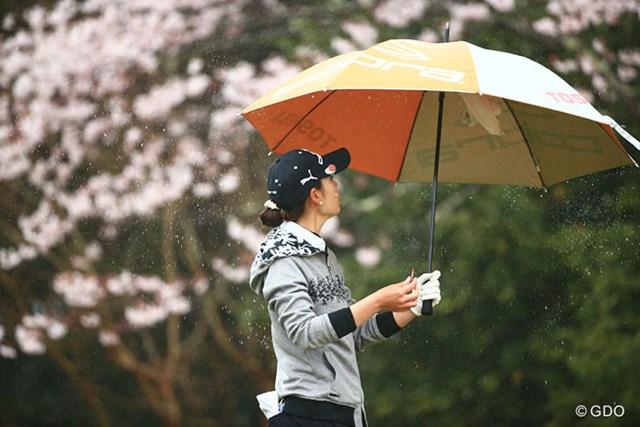 見ているのは果たして桜か?それとも傘か?
