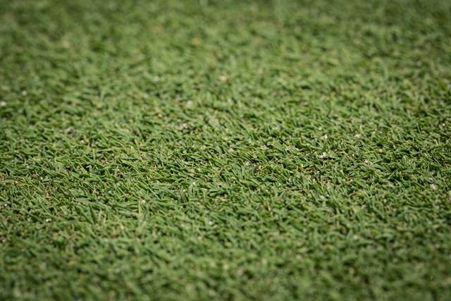 グリーンの洋芝はエアレーションをして穴に砂を入れると、新しい根が育つ。透水性もよくなり、芝の根が活性化されるのだ。