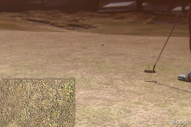 チェンバーズベイのグリーン。切り抜きはアップ写真。確かに球はポコポコとあらぬ方向に曲がっていく