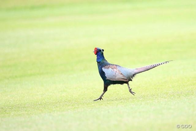 突如コースに現れたきれいな鳥だけど名前がわかりません
