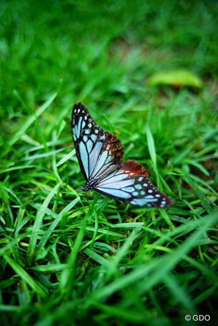 キレイな蝶をパチリ