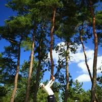 まるで海外で撮ったような色彩。 2015年 日本女子オープンゴルフ選手権競技 2日目 イ・ミヒャン