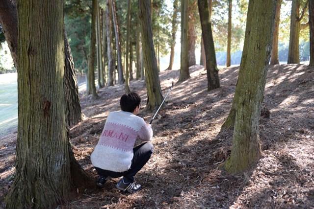 宍戸CC西_2_4 ティショットを左へミスすると、大きなペナルティを払うことになるのでご注意を。密集した林の中からは脱出ルートが見つけづらい