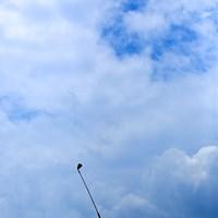 今日のゴルフを見たら少しは惚れますよ。 2016年 トヨタジュニアゴルフワールドカップ Supported by JAL 最終日 ホアキン・ニーマン