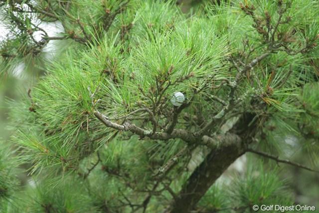 結果的には見つからなかったが、これが石川遼のボールである可能性は高い