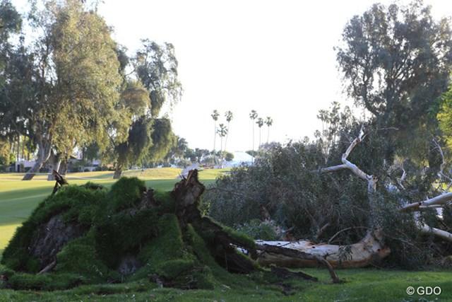 2017年 ANAインスピレーション 2日目 倒木 暴風による倒木はコースのあちこちで見られた