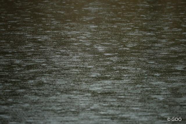 予報では曇だったのに一日中雨が降ってやがった。にゃろめ!
