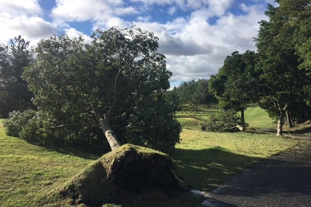 男子ツアー会場では木が倒れるなど台風の影響が大きいようだ…(※提供写真)