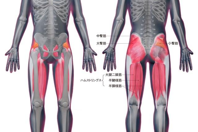 臀筋とハムストリングスの位置