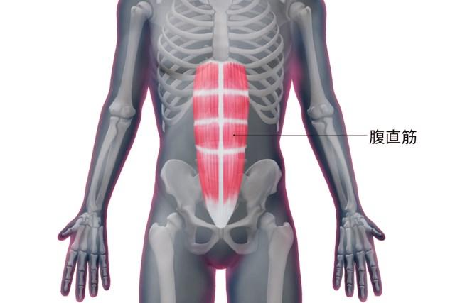 腹直筋の構造