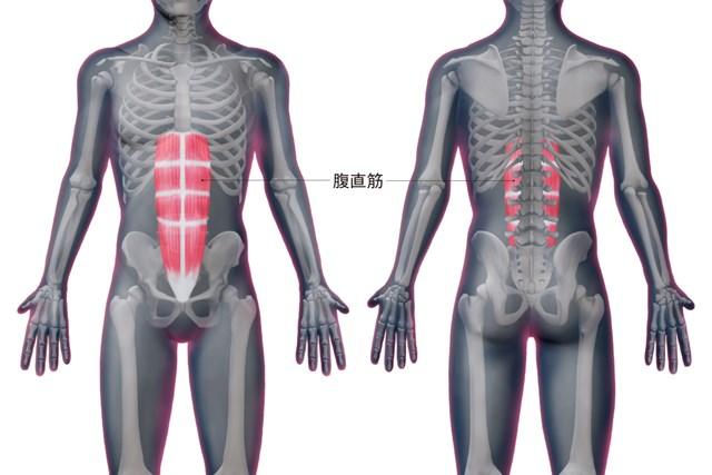 腹直筋の位置