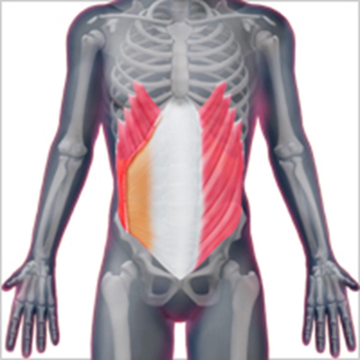 の な 痛み 右 脇腹 痛 筋肉 よう 2週間前から右脇腹が筋肉痛のような痛みが続き明後日病院へ行こうと思います、何科