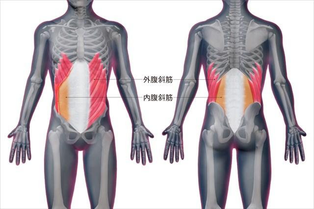 腹斜筋の位置