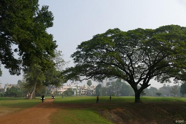 歴史を感じる木の大きさ