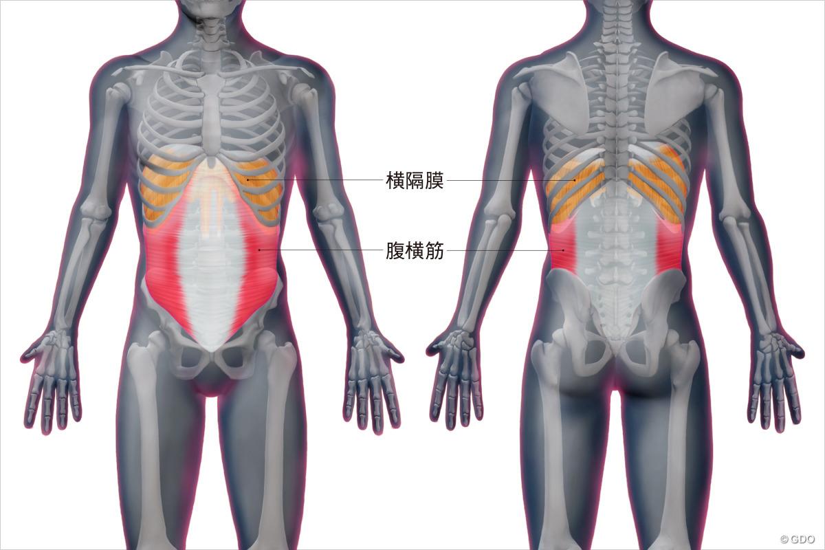 今回のレッスンテーマは腹横筋と横隔膜の位置