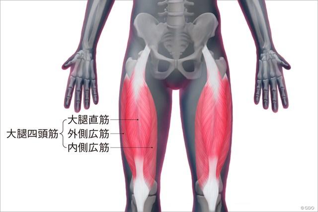 大腿四頭筋の構造