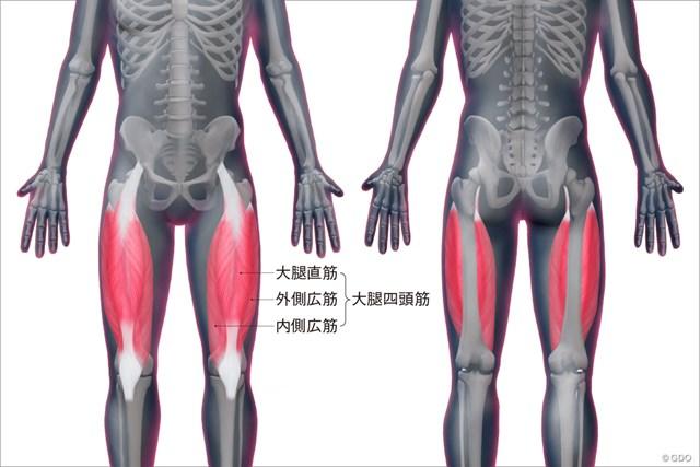 大腿四頭筋の位置
