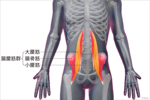 <ゴルフと筋肉>股関節まわりのストレッチ 腸腰筋の構造