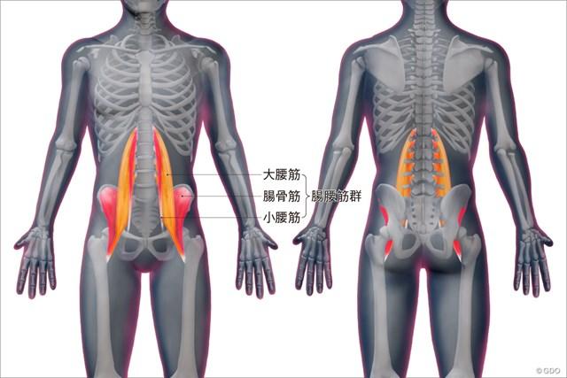 <ゴルフと筋肉>股関節まわりのストレッチ 腸腰筋の位置