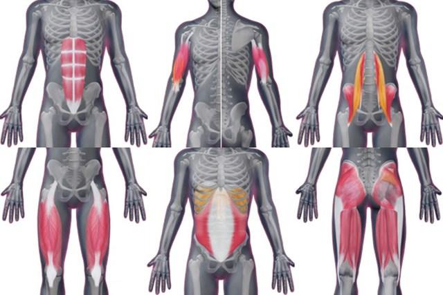 細かな筋肉解説のほか、ストレッチ方法も一目でわかる!