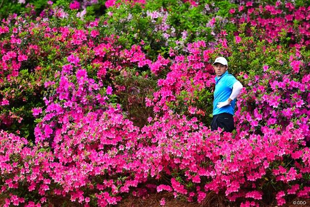 13番で「ピンクの海」に埋もれるマキロイ