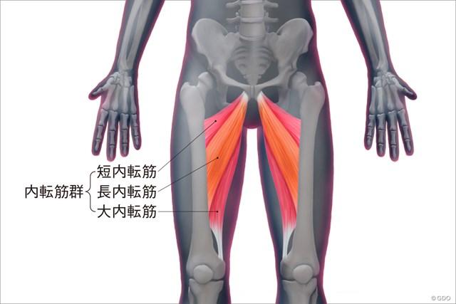内転筋群の構造