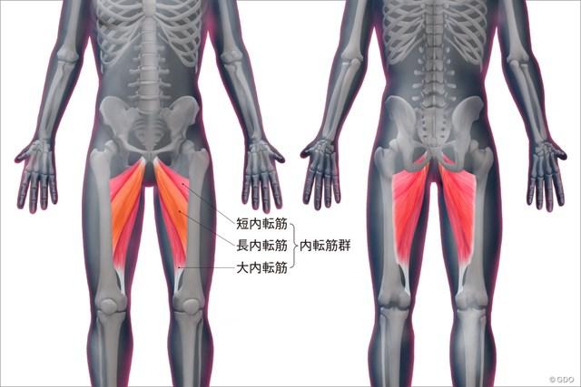 内転筋群の位置