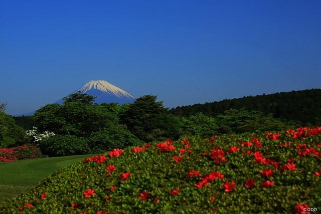 今日も朝から富士山が綺麗だったので1枚アップ。