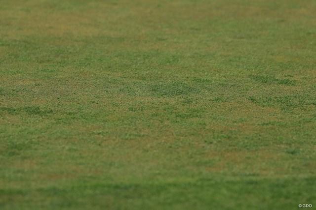 グリーンは数種の芝生が混ざっているとか。葉の硬さや成長具合に差が出て、プレーヤーを苦しめてるとか。
