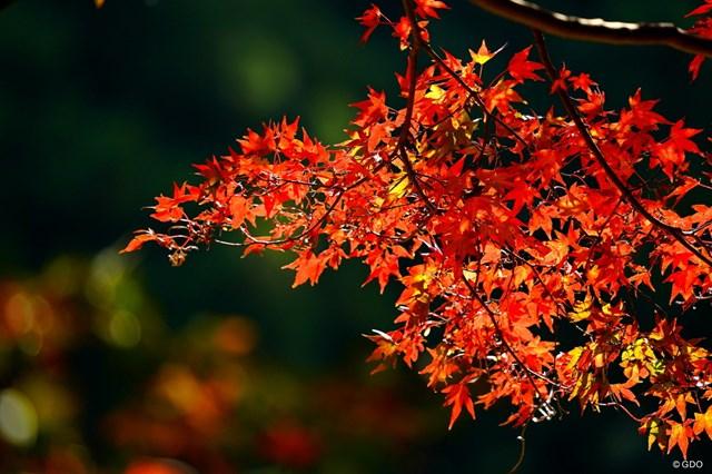 紅葉に彩られる秋、こんなに美しい景色に出会えるかも…