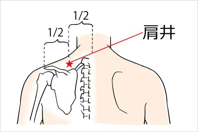 背中側の首の付け根から肩先を結んだ線の中間にあります