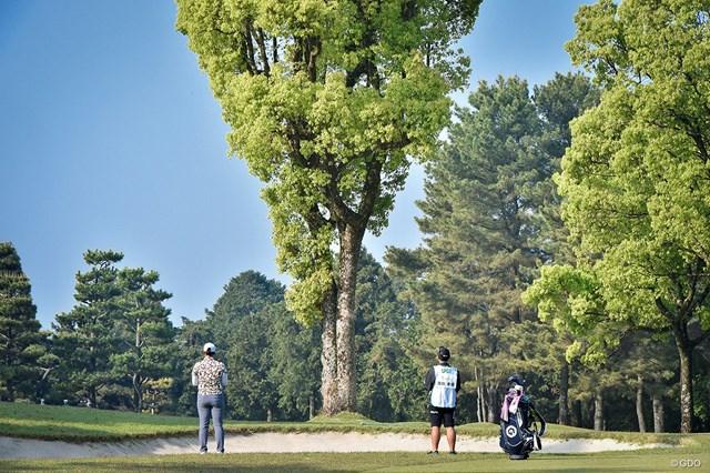 2019年 KKT杯バンテリンレディスオープン 2日目 コース この木、なんとかならんかね。