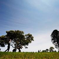 本日モ晴天ナリ 2019年 ~全英への道~ミズノオープン at ザ・ロイヤルGC 3日目 ディラン・ペリー