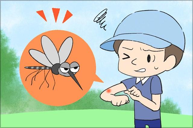 夏のゴルフは虫刺されに要注意! 今回は蚊について調査した