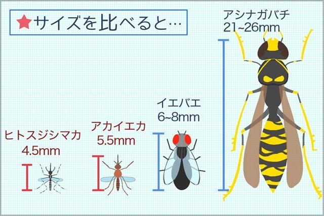 ハエ、ハチと比べてみると、やぶ蚊の小ささが良く分かる