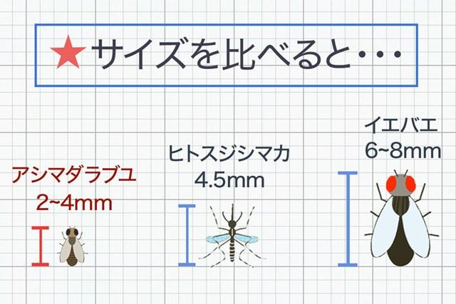 ブヨは蚊よりも小さいため羽音にきづかないうちに近づいてくる…