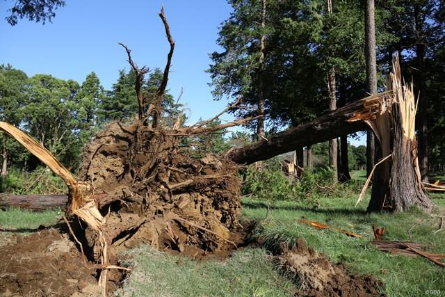 2020年 ZOZOチャンピオンシップ 事前 アコーディア・ゴルフ習志野カントリークラブ ZOZOチャンピオンシップの会場・アコーディア・ゴルフ-習志野カントリークラブは台風15号の影響を受けた。写真は被害直後の様子