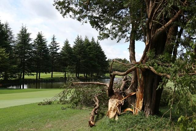 2020年 ZOZOチャンピオンシップ 事前 アコーディア・ゴルフ習志野-カントリークラブ 台風15号の影響で木が倒れたホールもあった