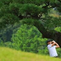 ちょうど気持ちよく松の木の隙間にはまった一枚 2019年 パナソニックオープンゴルフチャンピオンシップ 3日目 李尚熹