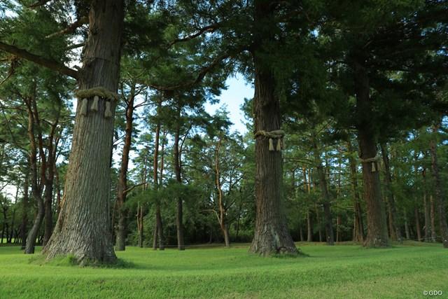 袖ヶ浦コースの16番ホールにある3本のご神木
