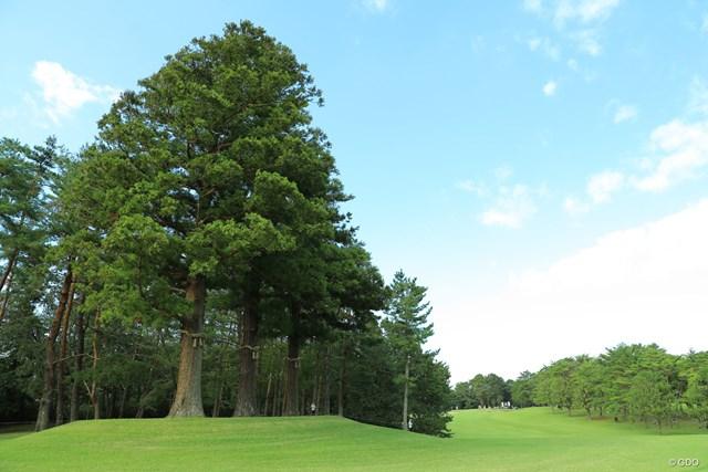 袖ヶ浦コースの16番は左サイドにご神木がある