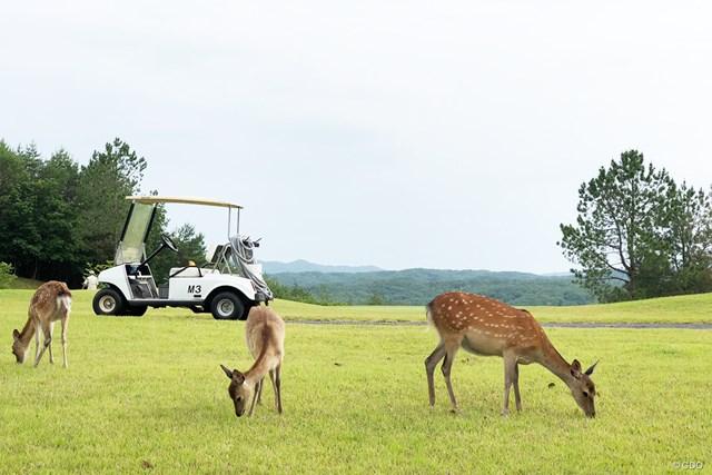 子どもにゴルフ場を開放するリージャスクレストゴルフクラブ