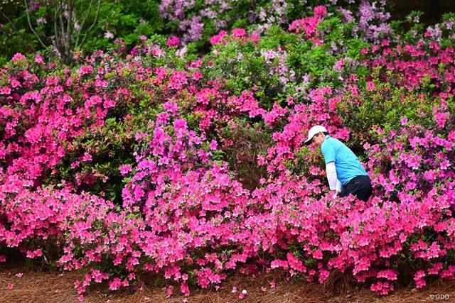 花の中からハロー!マキロイ。鮮やかなピンクですが、こちらはピンチ…