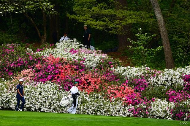 赤も白もピンクも美しいアザレアの花