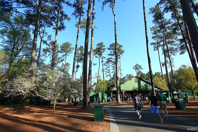 ギャラリーが歩く動線にも桜の木があるのです