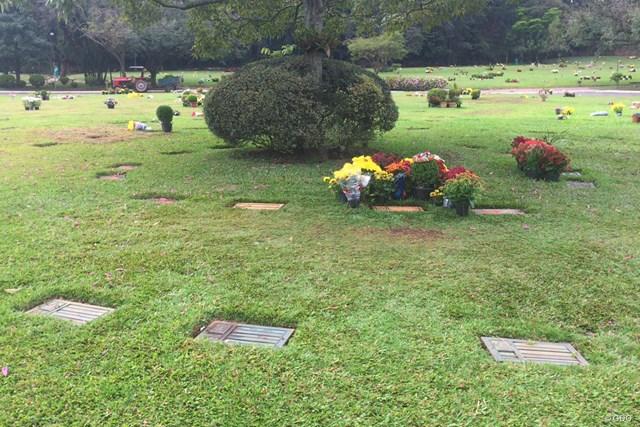 写真右中央の鉢植えが集まった場所にセナの墓がある